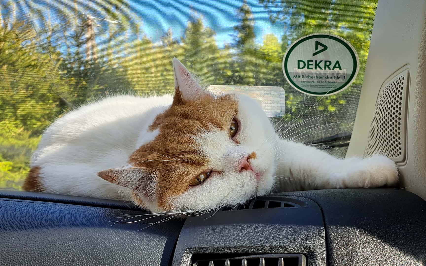 """Featured image for """"Podróżowanie ze zwierzętami"""""""