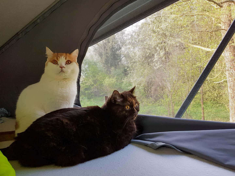 Podróżowanie kamperem ze zwierzętami koty