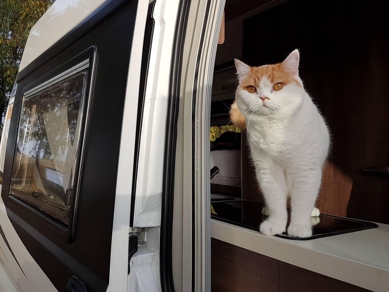 Kot w kamperze