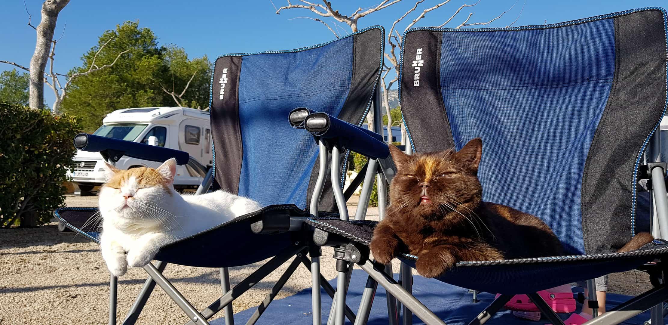 Podróżowanie kamperem ze zwierzętami